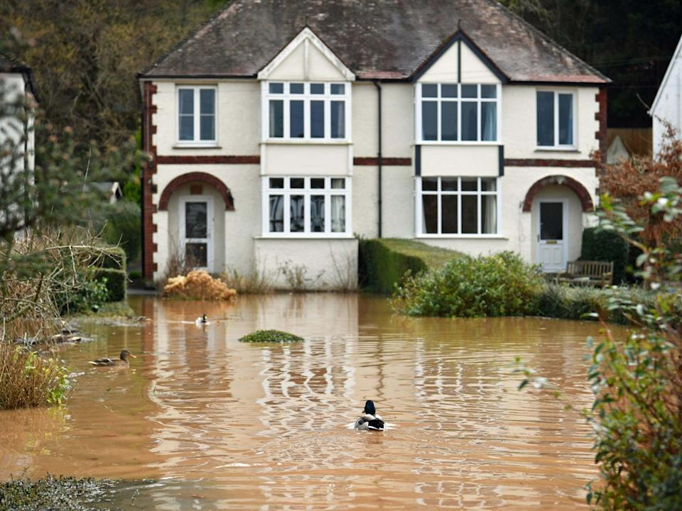 Ducks swimming in a back garden surrounded by flood water in Monmouth in the aftermath of Storm DennisPA