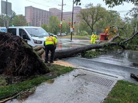 A tree lies on the road after Hurricane Dorian slammed into Canada's Atlantic coast on Saturday in Halifax