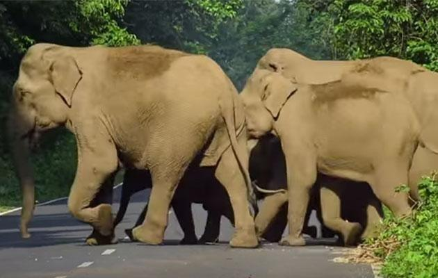 The family safely crosses the road, thanks to mum. Photo: YouTube