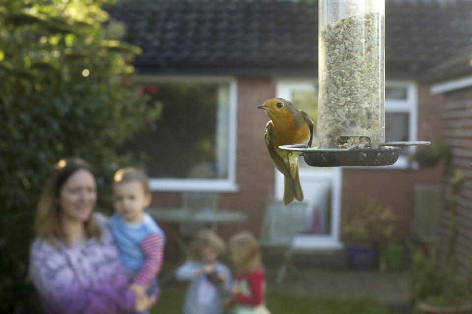 Robin on bird feeder with family watching