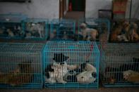 """""""I have to rescue them because if I don't, they will die for sure,"""" says Zhi of the nearly 8,000 dogs he has taken in"""