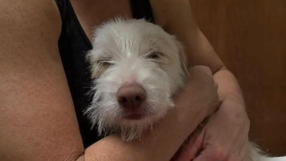 Heartwarming Video of Dog's Rescue Will Bring Tears to Your Eyes (ABC News)