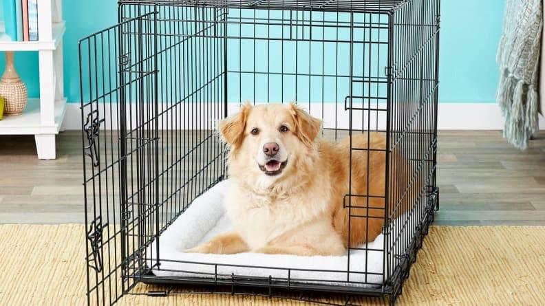 Crate training will help to ensure your foster dog is comfortable and safe.