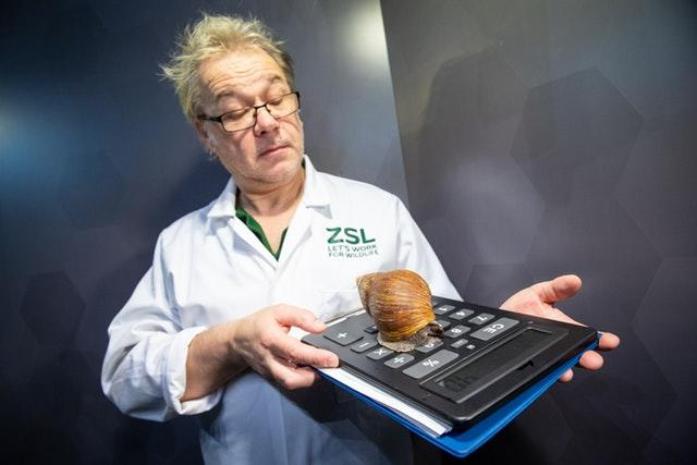 A zookeeper holds an African Giant Land Snail