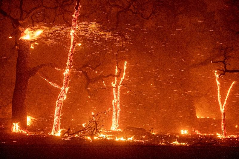 Embers fly as wind and flames from the Camp fire tear through Paradise, California on November 8, 2018. (AFP Photo/Josh Edelson)