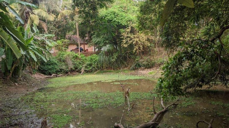Goans join hands with migrant workers to revive dying ponds