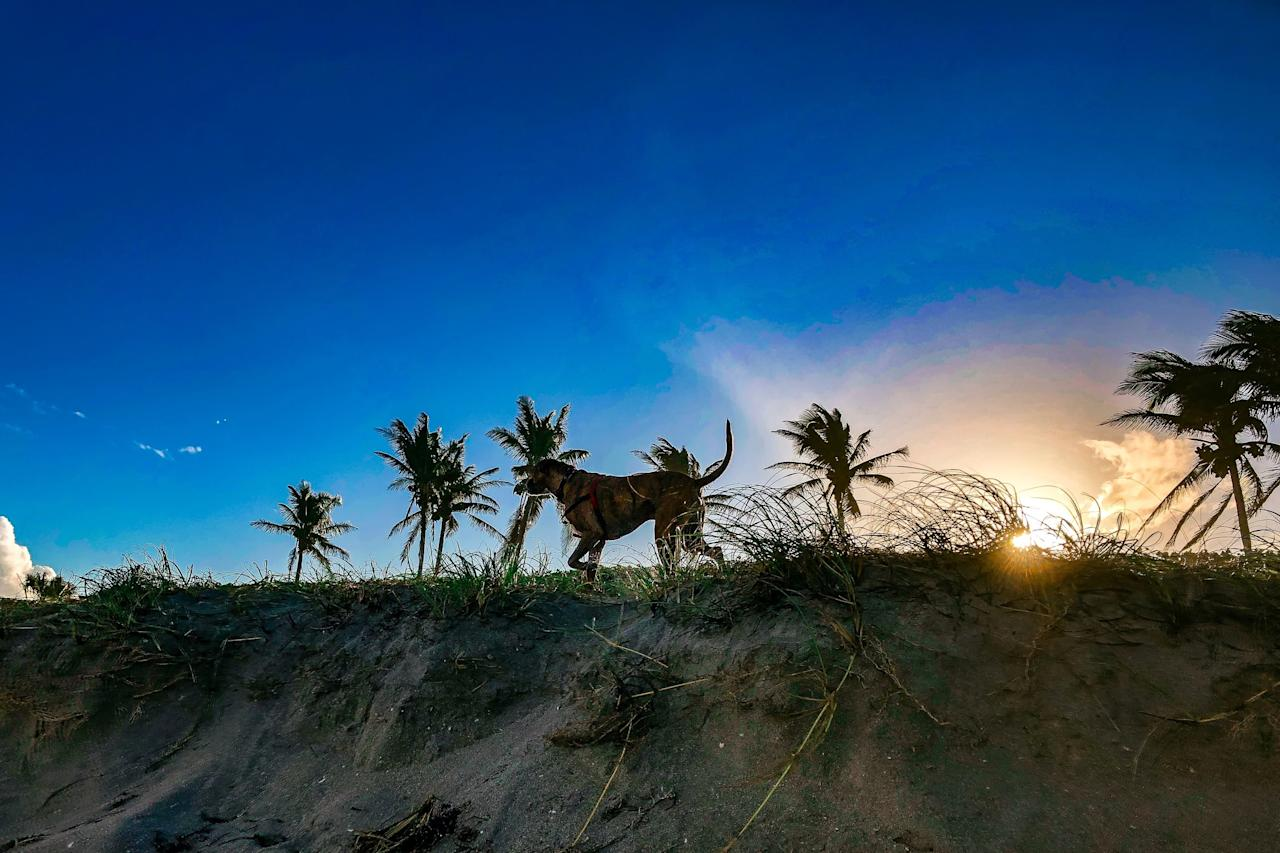 "<p>Vacationers with four-legged friends flock year-round to this pristine white-sand paradise on the Florida panhandle—and for good reason. <a href=""https://www.coastalliving.com/travel/gulf-coast/panama-city-beach-florida"" target=""_blank"">Panama City Beach</a> is notoriously friendly to furry visitors, with pets able to romp around local beaches, stroll through Pier Park (a well-known outdoor mall), and dine with their humans on many a breezy patio.</p>"