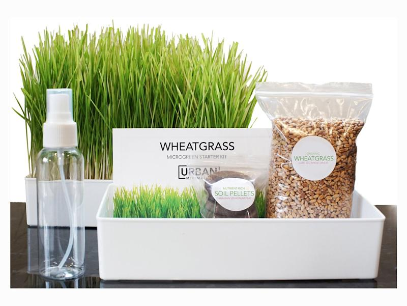 Grow Your Own Wheatgrass Kit. Image via Etsy.