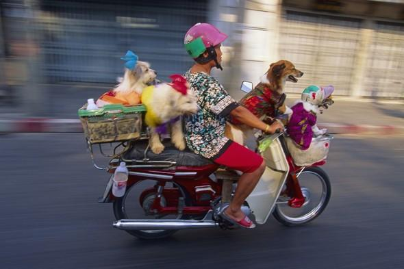 In pictures: pets on holiday