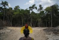 FILE - In this Aug. 31, 2019 file photo, Krimej Indigenous Chief Kadjyre Kayapo looks out at a path created by loggers on the border between the Biological Reserve Serra do Cachimbo, front, and Menkragnotire indigenous lands, in Altamira, Para state, Brazil. More than a dozen Senate Democrats sent a letter to U.S. President Joe Biden on Friday, April 16, 2021, complaining of a woeful environmental track record by his Brazilian counterpart, Jair Bolsonaro, and urging him to condition any support for Amazon preservation on significant progress reducing deforestation. (AP Photo/Leo Correa, File)