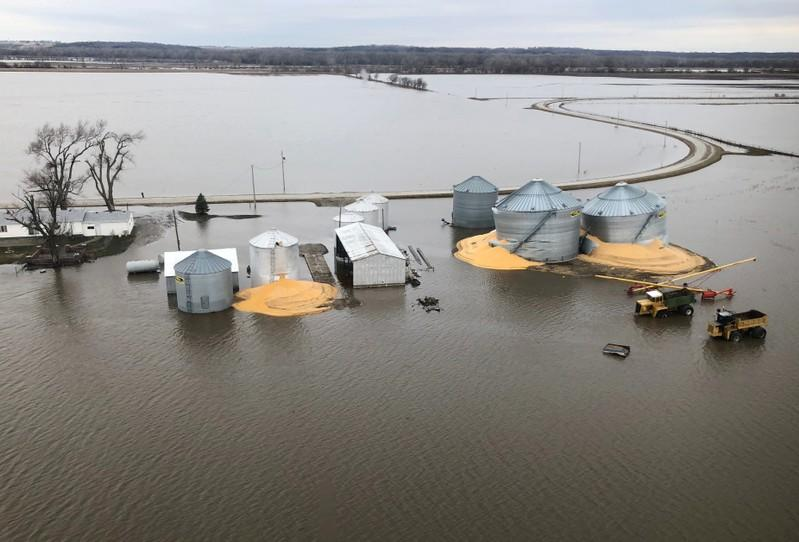FILE PHOTO: The contents of grain silos which burst from flood damage are shown in Fremont County, Iowa