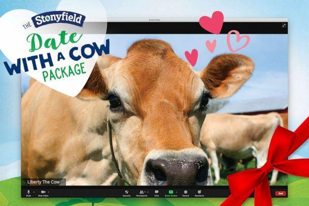 """PHOTO: The Stonyfield """"Date with a Cow"""" package includes a 15 minute Zoom with a cow. (Stonyfield Organic)"""