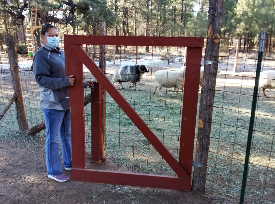 This undated photo provided by Arvena Peshlakai shows Arvena Peshlakai opening the gate to her sheep corral at her home in Crystal, New Mexico. She and her husband Melvin volunteered to participate in coronavirus vaccine trials on the Navajo Nation. As coronavirus vaccines were being developed around the world, few Native American tribes signed up to participate. The reasons range from unethical practices of the past to the quick nature of the studies amid the pandemic. Native researchers say without participation from tribal communities, tribes won't know which vaccine might best be suited for their citizens. (Courtesy Arvena Peshlakai via AP).