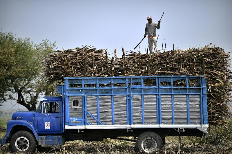 Workers load a truck with scorched sugar cane stalks to be taken to a processing plant for pressing. The resulting syrup is refined into sugar (AFP Photo/PEDRO PARDO)
