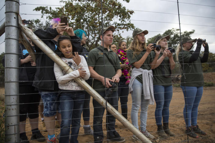 <p>People wait to greet the arrival of two trucks carrying 33 lions to a private reserve on May 1, 2016, in Vaalwater, South Africa. <i>(Dan Kitwood/Getty Images)</i></p>