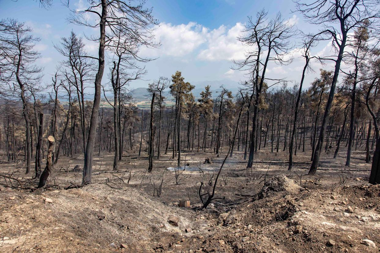 EVIA ISLAND, GREECE - 2021/08/19: View of burnt pine tree forest on the mountain side near Dafni. The aftermath of the wildfires in the northern part of the Greek island of Evia (Euboea ) where fire kept burning almost for 10 days, burning forest and buildings. Almost 100,000 hectares of forest burned in Greek fires according to Copernicus European Emergency Services. (Photo by Nik Oiko/SOPA Images/LightRocket via Getty Images)