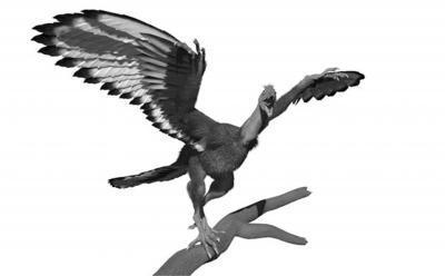 Ancient Dinobird Wore Black and White