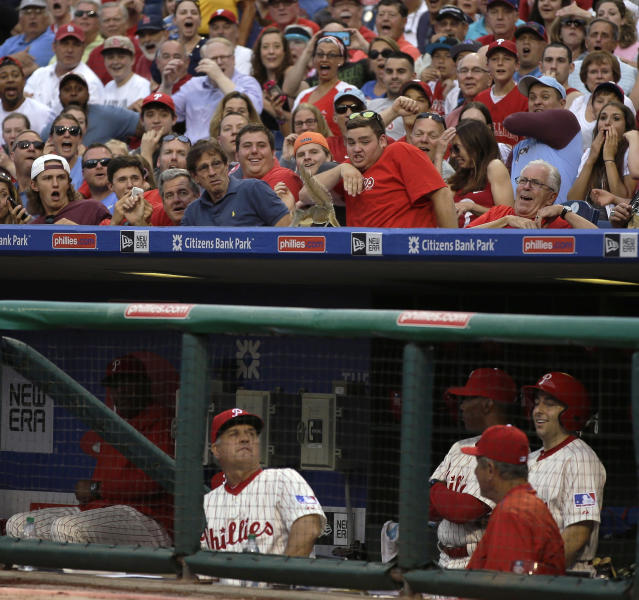 A squirrel scurries across the top of the Philadelphia Phillies' dugout behind manager Ryne Sandberg during the second inning of a baseball game between the Philadelphia Phillies and the St. Louis Cardinals, Friday, June 19, 2015, in Philadelphia. (AP Photo/Matt Slocum)