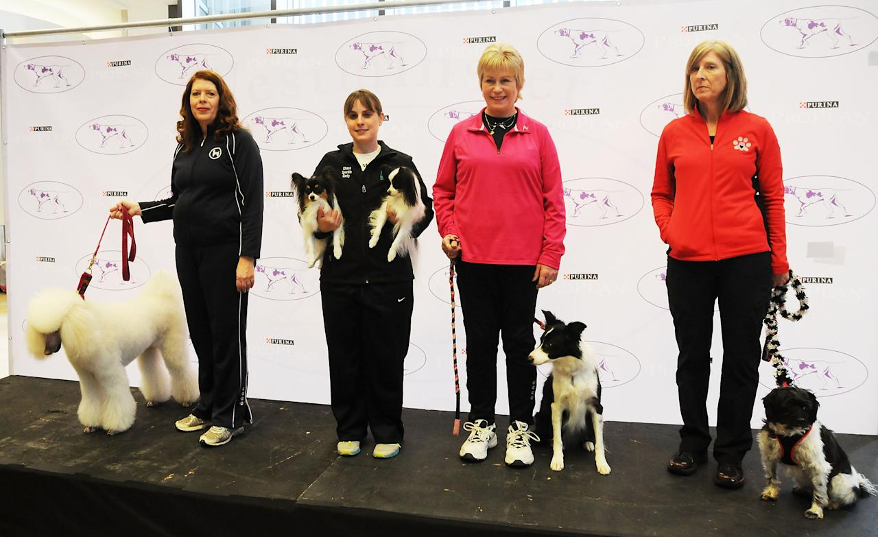 NEW YORK, NY - JANUARY 15: (L-R) Dog owners Nancy E. Scott with her Standard Poodle 'Callia', Andrea Samuels with Papillons 'Fame' and 'Carly', Dianne T. Jamison with Border Collie 'Gem' and Irene Palmerini wih her All American 'Alfie' attend the 138th Annual Westminster Kennel Club Dog Show press conference at Madison Square Garden on January 15, 2014 in New York City. (Photo by Desiree Navarro/Getty Images)