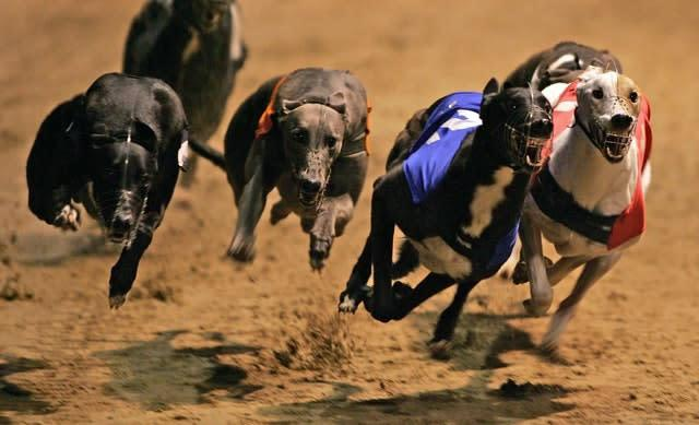 Westmead Hawk (left) winning the 2006 English Greyhound Derby (Mark Lees/PA)