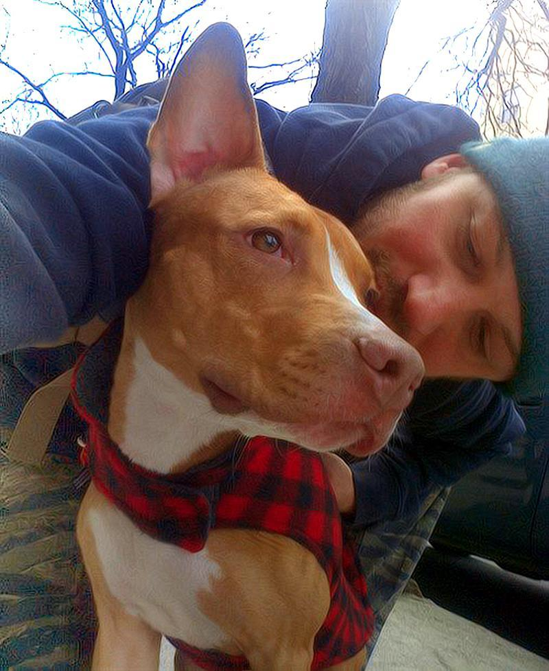 """<p>Hardy's love for dogs runs deep, so deep, in fact, that he revealed to <em>Glamour </em>U.K. in June 2014 that he <a rel=""""nofollow noopener"""" href=""""http://www.glamourmagazine.co.uk/article/tom-hardy-loves-come-dine-with-me"""" target=""""_blank"""" data-ylk=""""slk:turns on entertaining TV shows"""" class=""""link rapid-noclick-resp"""">turns on entertaining TV shows</a> for them to watch when he's not home. """"They've got to feel that someone's in the house,"""" he said. <a rel=""""nofollow noopener"""" href=""""https://www.facebook.com/TomHardyUK/photos/a.643638628980503.1073741829.555896884421345/643638738980492/?type=3&theater"""" target=""""_blank"""" data-ylk=""""slk:Tom Hardy via Facebook"""" class=""""link rapid-noclick-resp"""">Tom Hardy via Facebook</a>) </p>"""