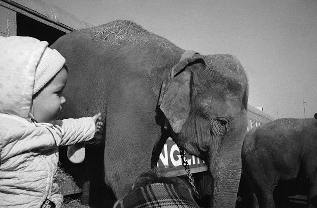 <p>Three-year-old Bruce Nathan of the Bronx, New York watches elephant come down ramp of train as Ringling Brothers and Barnum and Bailey Circus arrives in New York on March 31, 1965. Scene was at Bronx freight yards. (AP Photo/BC) </p>