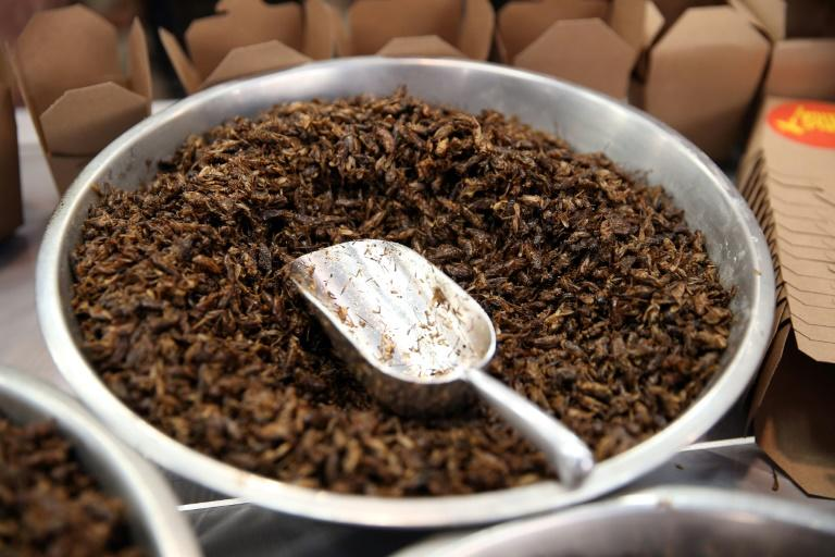 Fried crickets, roasted cockroach, honey-flavoured ants, mealworm and chocolate coated popcorn are now available to try and buy in Australia's cities -- and while the cuisine remains a novelty, there are signs it is growing in popularity
