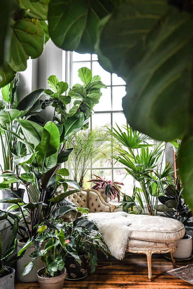 "<p><a href=""https://www.elledecor.com/design-decorate/room-ideas/g3464/how-to-brighten-a-dark-room/"">Dim,</a> dry, or overly humid rooms impeding your dreams of becoming an at-home horticulturist? These factors—which are all too common for apartment dwellers—may have once hindered you from pursuing a life as a plant parent…until now. While many plants require paradise-like living arrangements with abundant light and constant attention, there are an array of options that can survive in less-than-perfect conditions. We tapped Baltimore-based plant stylist <a href=""https://thingsbyhc.com/"" target=""_blank"">Hilton Carter</a>, author of <em><a href=""https://www.amazon.com/Wild-Interiors-Beautiful-plants-beautiful/dp/1782498753"" target=""_blank"">Wild Interiors</a></em>, to recommend the best indoor apartment <a href=""https://www.elledecor.com/shopping/best-stores/g19574855/buy-plants-online/"" target=""_blank"">plants to buy online</a> and how to care for them once they're all yours.</p>"