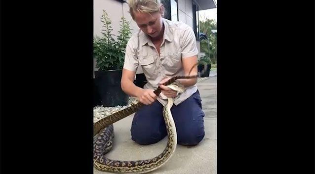 The snake was a female scrub python. Source: Facebook/Brydie Maro