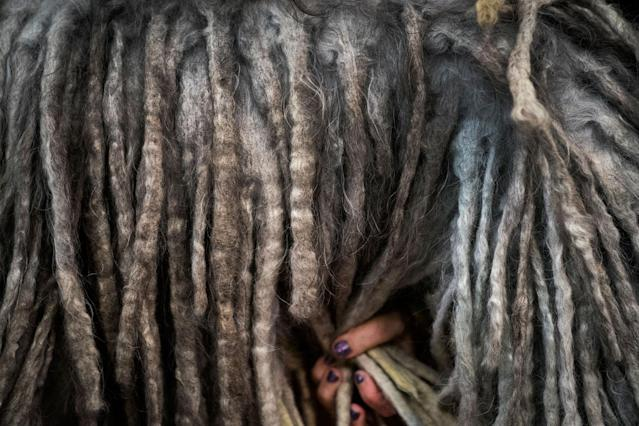 <p>A Bergamasco sheep dog is groomed backstage at the 142nd Westminster Kennel Club Dog Show at The Piers on Feb. 12, 2018 in New York City. (Photo: Drew Angerer/Getty Images) </p>