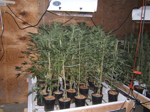 FILE - This undated police photo provided by the Warren County Drug Task Force shows a marijuana growing operation at a warehouse in Blue Ash, Ohio. Tyler Pagenstecher, who police say played a major role in a drug ring that sold as much as $20,000 worth of high-grade marijuana a month, pleaded guilty to drug-trafficking charges in juvenile court on Aug. 1, and is to be sentenced Oct. 21, 2012. (AP Photo/Warren County Drug Task Force)