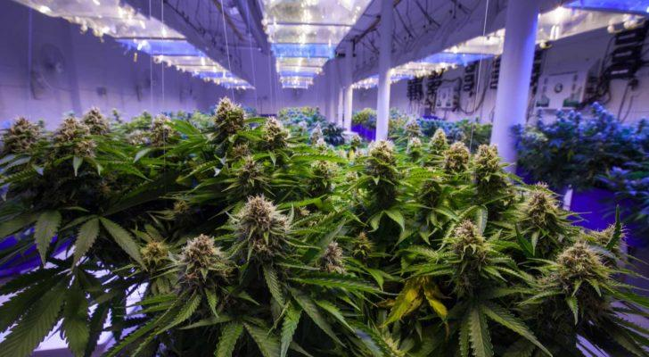 3 Cannabis Stocks That Are Ready to Run