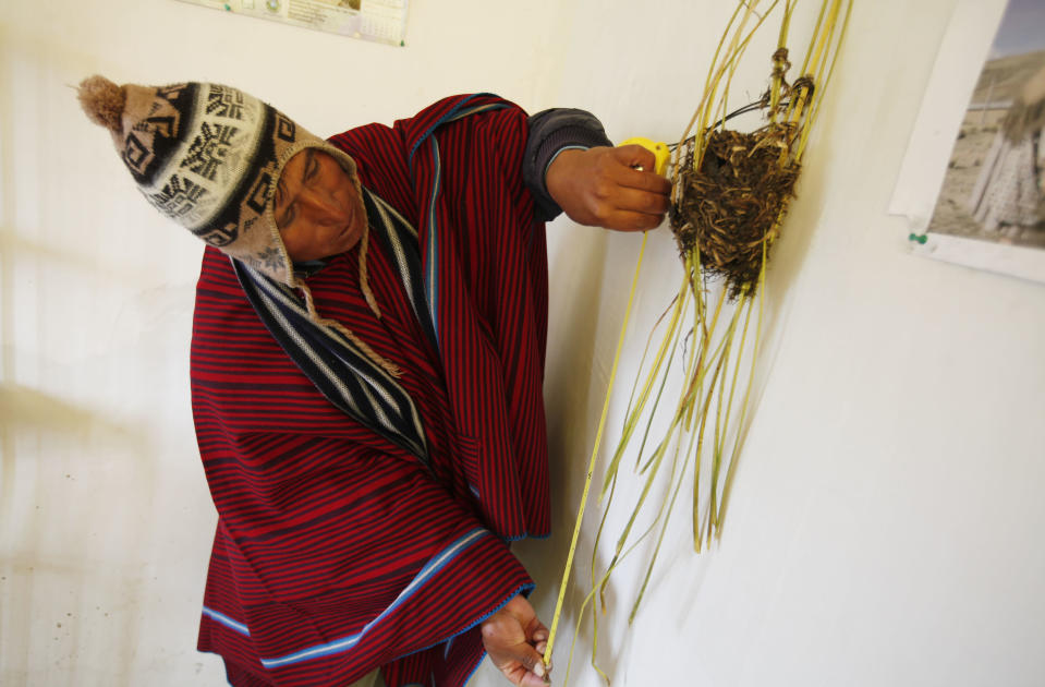 """In this Feb. 14, 2014 photo, farmer and traditional meteorologist Francisco Condori measures last year's nest made by a small bird known as quilli quilli, inside his home in Cutusuma, Bolivia. Condori measures the height of the nests from the surface of the lake water determine how much rain is to come. """"This year they initially built their nests about 40 centimeters (1.3 feet) above the water level. Then they dismantled them,"""" Condori says. Twice, in fact, did the birds dismantle nests before finally reweaving them at nearly twice their original height. """"We knew it was going to rain a lot,"""" he says. (AP Photo/Juan Karita)"""