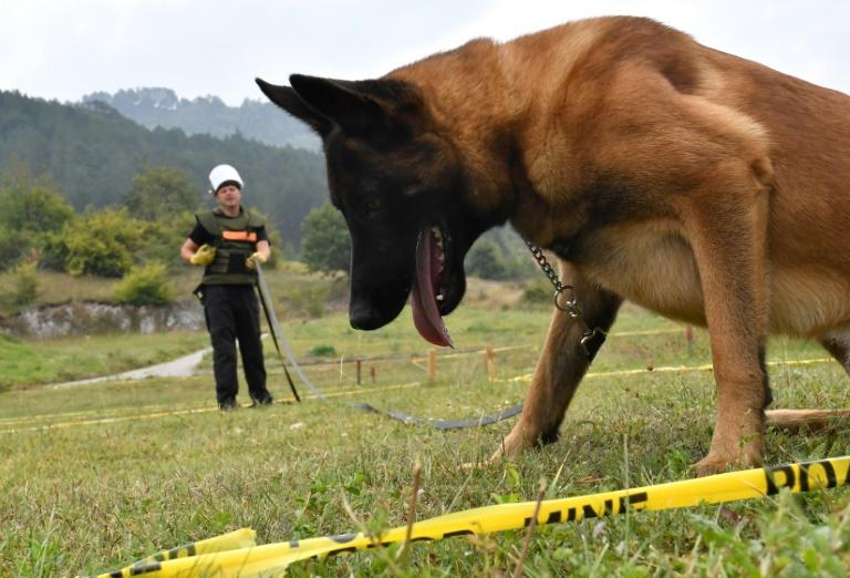A life-saving 'game': Bosnia trains world's mine-detecting dogs