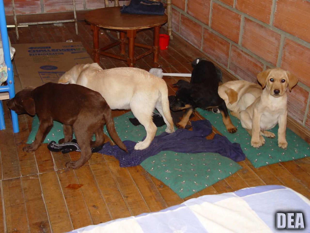 Puppies were rescued from a Colombian farm in 2005 (Picture: AP)