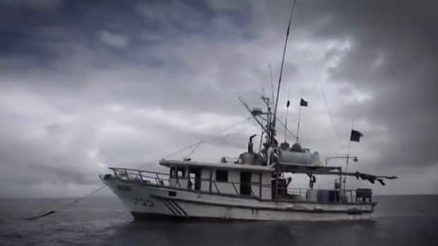 The Department of Fisheries and Oceans is partnering with officials from other countries to help locate so called 'dark vessels,' ships that have turned off location transmitters to evade authorities while they fish illegally. (DFO - image credit)