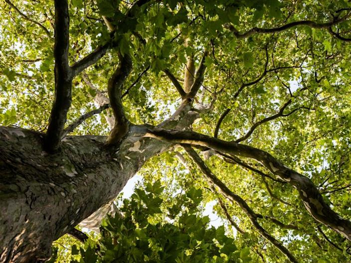 A tree tour is a novel way of exploring the city (Getty/iStock)