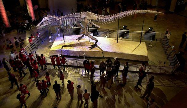 PHOTO: This May 17, 2000 file photo shows Sue, the largest and most complete Tyrannosaurus rex skeleton ever found, on public display at the Field Museum of Natural History in Chicago. company. (M. Spencer Green/AP)