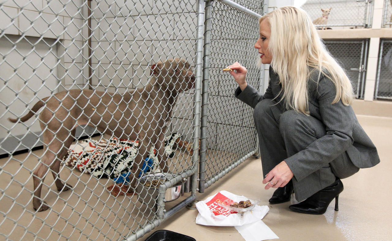 This March 8, 2012 file photo shows Nicole Andree feeding a hamburger to her dog, Prada, a 4-year-old pit bull mix, at an animal control facility in Nashville, Tenn. Prada has been spared by a judge following an outcry from animal lovers and the acceptance of a last-ditch proposal to keep the dog alive. Andree asked a judge to spare her beloved companion if she agreed to send the animal to the Villalobos Rescue Center in New Orleans. The dog was declared vicious and ordered to be euthanized after escaping from her home and attacking several dogs in an upscale Nashville neighborhood in January 2011.   (AP Photo/Mark Humphrey, File)