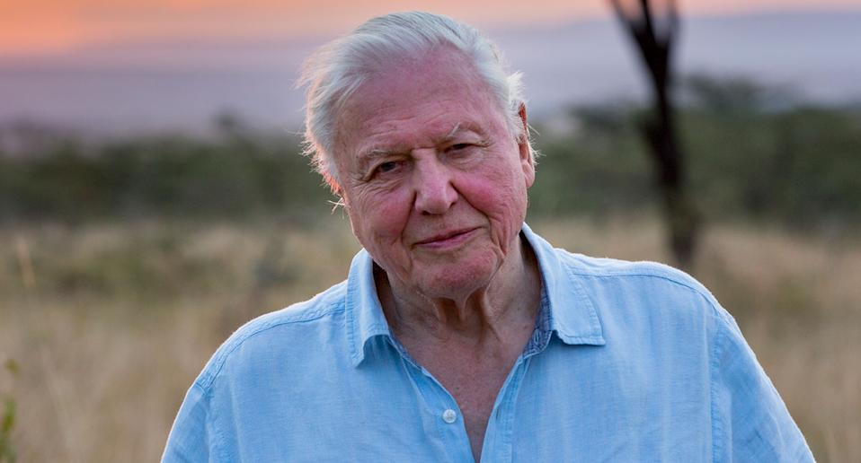 Sir David Attenborough narrates Our Planet (Netflix)