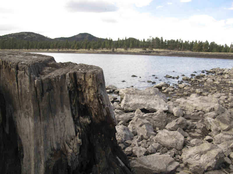 In this April 11, 2014 photo, low reservoir levels reveal tree stumps and a cracked lake bed in Williams, Ariz. Officials in Williams have declared a water crisis amid a drought that is quickly drying up nearby reservoirs and forcing the community to pump its only two wells to capacity.(AP Photo)