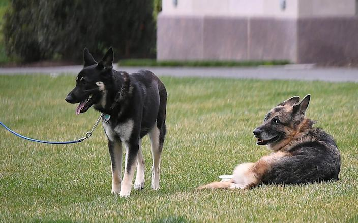 The First Dogs on the South Lawn of the White House earlier this year - REUTERS