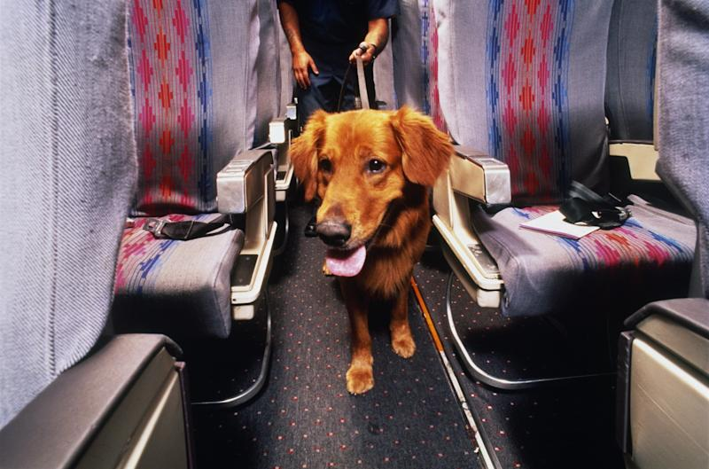 Transporting pets along the friendly skies can be risky business.