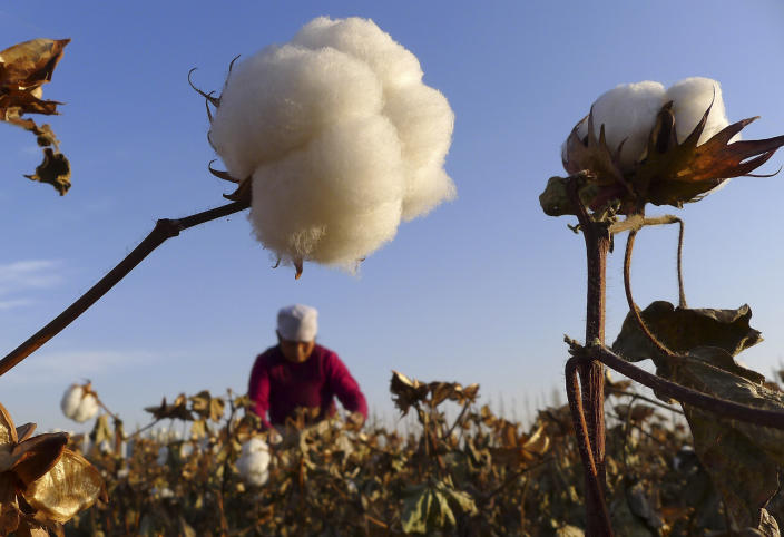 A farmer picks up cotton from a field in Hami, northwest China's Xinjiang Uygur autonomous region, November 1, 2012. China is expected to harvest 6.9 million tonnes of cotton this year, a decline of 4.2 percent from a year ago, due to a smaller sowing area, an official from the country's top planning agency said in remarks published on October 9. Picture taken November 1, 2012. REUTERS/China Daily (CHINA - Tags: AGRICULTURE BUSINESS) CHINA OUT. NO COMMERCIAL OR EDITORIAL SALES IN CHINA