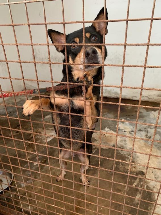 Rescued dog. Photo: Action for Singapore Dogs/Facebook