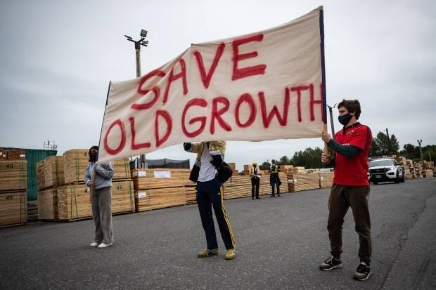 Protesters hold a banner as they stand in front of stacks of lumber during a demonstration against old-growth logging, at Teal-Jones Group sawmill in Surrey, B.C., on Sunday, May 30, 2021.