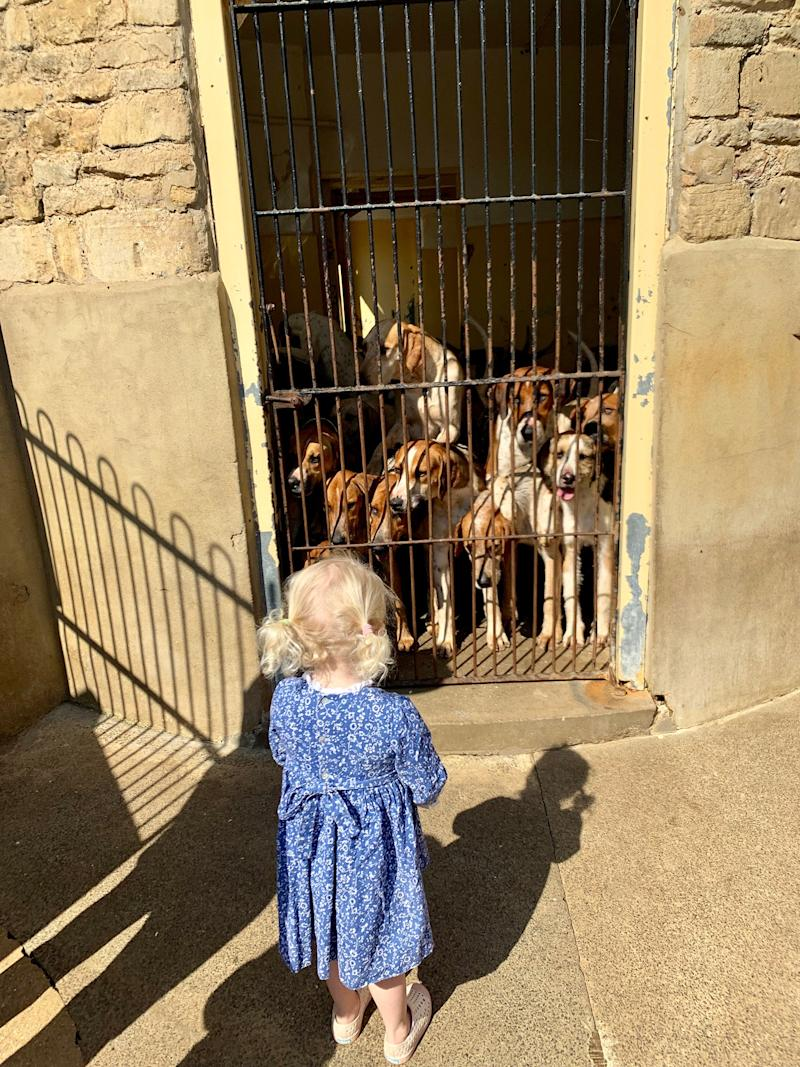 Olympia loved seeing the hounds in their kennels, inside a beautiful building dated from 1750, still used for its original purpose.