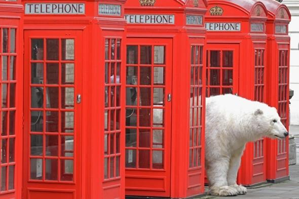A polar bear? In London? No, you're not seeing things...
