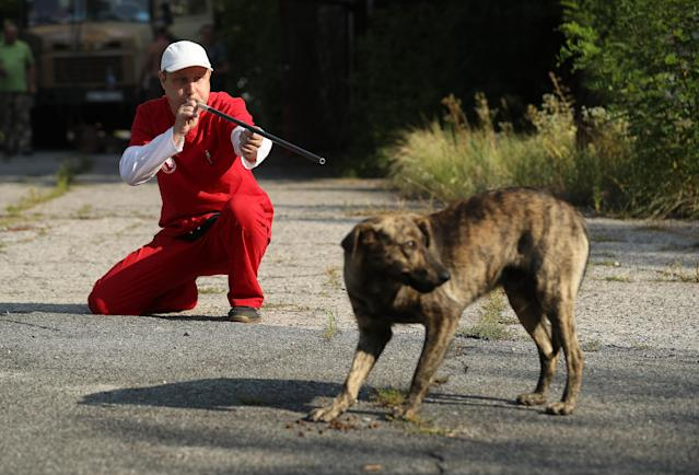 """<p>Pavel """"Pasho"""" Burkatsky, a professional dog catcher from Kiev, takes aim with a blow gun to shoot a tranquilizer dart at a stray dog in the exclusion zone around the Chernobyl nuclear power plant on Aug. 19, 2017, near Chernobyl, Ukraine. Burkatsky was taking part in the Dogs of Chernobyl project launched by the Clean Futures Fund, a U.S.-based charity that pursues humanitarian projects at Chernobyl. (Photo: Sean Gallup/Getty Images) </p>"""