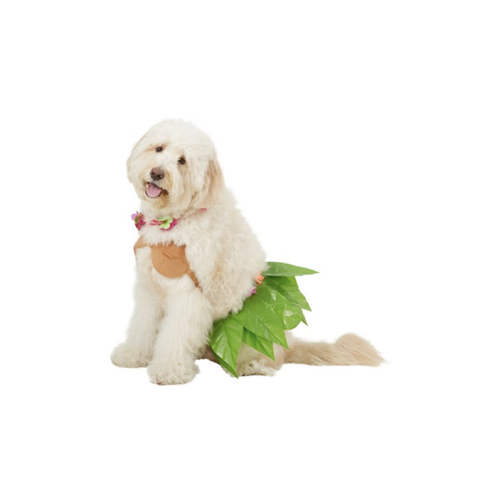 """<p><strong>Rubie's Costume Company</strong></p><p>chewy.com</p><p><strong>$10.99</strong></p><p><a href=""""https://go.redirectingat.com?id=74968X1596630&url=https%3A%2F%2Fwww.chewy.com%2Frubies-costume-company-hula-girl-dog%2Fdp%2F157454&sref=https%3A%2F%2Fwww.oprahdaily.com%2Flife%2Fg28714689%2Ffunny-dog-halloween-costumes%2F"""" rel=""""nofollow noopener"""" target=""""_blank"""" data-ylk=""""slk:Shop Now"""" class=""""link rapid-noclick-resp"""">Shop Now</a></p><p>If you're dreaming of Hawaii, this little hula girl is irresistible with her leafy skirt, bikini top and lei.</p>"""